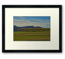 Kaiserstuhl - vines Framed Print
