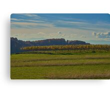 Kaiserstuhl - vines Canvas Print