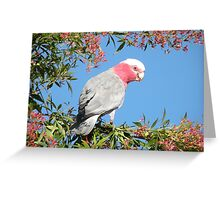 Beauty in the Morning, the other side. Greeting Card