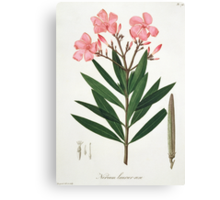 Oleander from 'Phytographie Medicale' Canvas Print