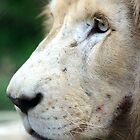 Male White Lion  by Chris  Randall