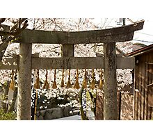 cherry blossom and torii Photographic Print
