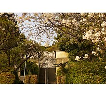 japanese spring Photographic Print