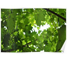 Leaf Cover Poster