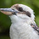 Kookaburra by jezza323