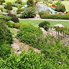 Japanese Gardens, Cowra by Trish Meyer