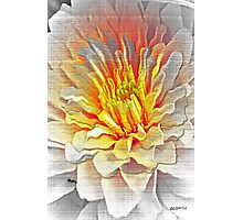 Dahlia Flower from Dark to Bright Photographic Print