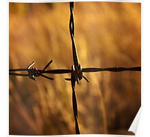 Barbed wire at sunrise Poster