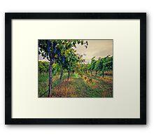 Vineyard Colours Framed Print