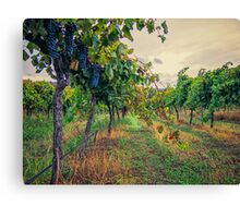 Vineyard Colours Canvas Print
