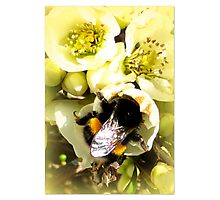 Hungry Bumble Bee Photographic Print