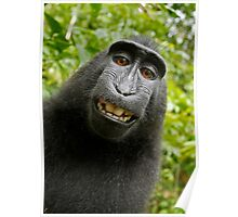 FUNNY MONKEY PHOTO - CUTE Poster