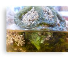Broccoli Jar  Canvas Print
