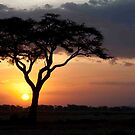 Kenyan Sundown by phil decocco