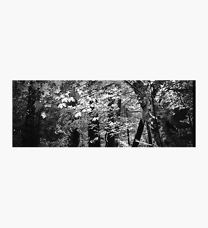 Muir Woods - San Francisco Photographic Print