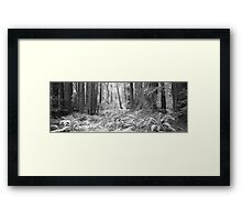 Muir Woods - San Francisco Framed Print