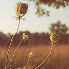a summer field by beverlylefevre