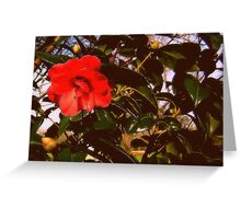 Touch of red Greeting Card