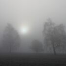 Trees in the mist by Trine