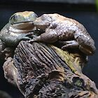 Frogs love by Kate Farkas