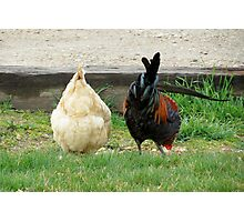 Fowl Butts Photographic Print