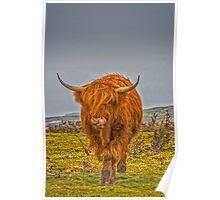 Highland Cow on Bodmin Moor Poster