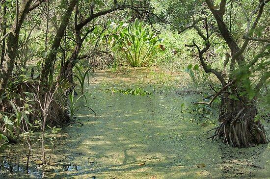 Sometimes You Just get Swamped!  by John  Kapusta