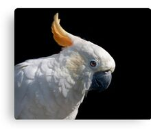Do you have some peanuts....? Canvas Print