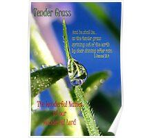 Tender Grass Poster