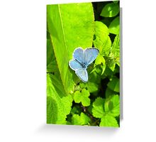 Common Blue One Greeting Card