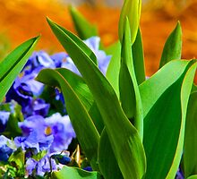 Tulip Bud by NatureGreeting Cards ©ccwri