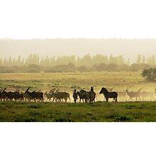 Dust Cloud Photographic Print