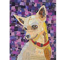 LA Chihuahua Photographic Print