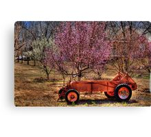 Farmland Blooming Fruit Trees Canvas Print
