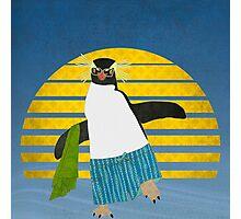 Northern Rockhopper Penguin on Spring Break Photographic Print