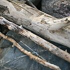 Drift Wood Three by Michael  Herrfurth