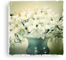 White Blossoms, image aged Canvas Print