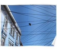 Pigeon on messy Valparaiso's wires Poster