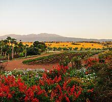 Ngorogoro Farmlands by James Toal