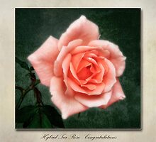 Tea Rose, Congratulations by John Edwards