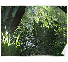reflections at springtime - reflejos en la primavera Poster