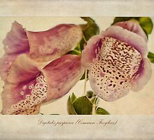 Foxglove Textures by John Edwards