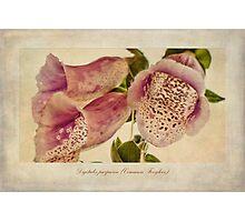 Foxglove Textures Photographic Print