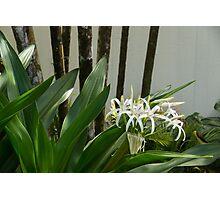A Garden Like an Ikebana Flower Arrangement Photographic Print