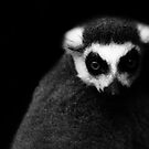 Lemur of Madagascar by liberthine01