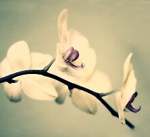 Vintage Orchid by Jessica Jenney