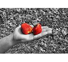 appetite on strawberries Photographic Print