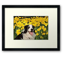 Dog in the Daffodils Framed Print