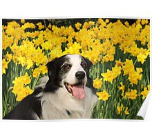 Dog in the Daffodils Poster