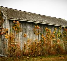 Old Barn by andreaanderegg